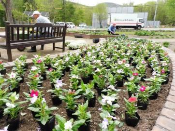 マウレの庭 植栽作業